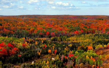 Aerial photo of trees with changing leave
